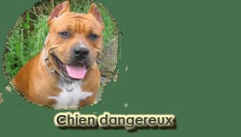 CHIENS DANGEREUX – rappel réglementation